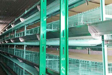 Layer Cage System Installed Successfully In Kazakhstan