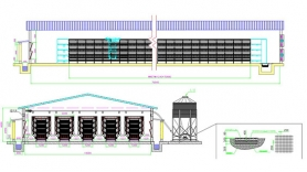 50000 design plan for pullet