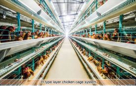 H type layer chicken battery cage system